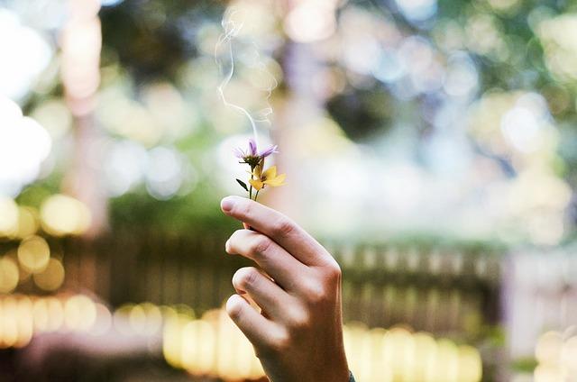 flower-1210067_640
